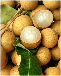 Agriculture Ministry to prevent longan price dropping this year